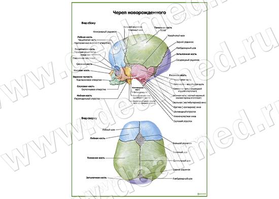 Малыш на приеме у невролога. Форма и размер 27